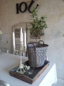 Gamle franske skodder østerskurv i zink med olivebtræ i